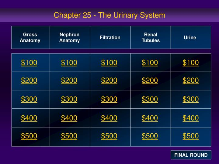 chapter 25 the urinary system n.