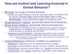 How are Instinct and Learning Involved in Animal Behavior?