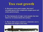 Tree root growth