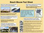 Beach Mouse Fact Sheet