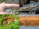 Wildlife in the Modern World