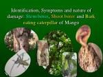 Identification, Symptoms and nature of damage:  Stem borer ,  Shoot borer  and  Bark eating caterpillar  of Mango