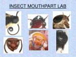 INSECT MOUTHPART LAB