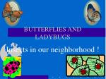 BUTTERFLIES AND LADYBUGS