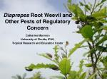 Diaprepes  Root Weevil and Other Pests of Regulatory Concern