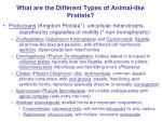 What are the Different Types of Animal-like Protists?