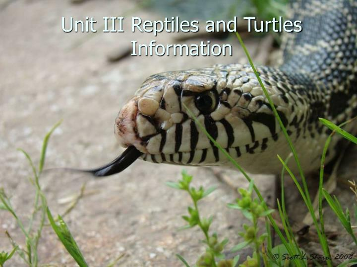 unit iii reptiles and turtles information n.