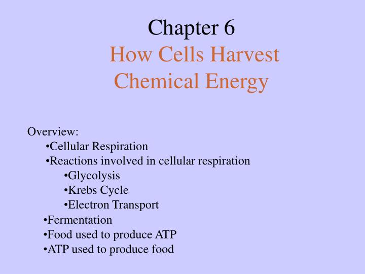 chapter 6 how cells harvest chemical energy n.