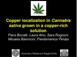 Copper localization in  Cannabis sativa  grown in a copper-rich solution Piera Bonatti, Laura Arru, Sara Rognoni,  Micae