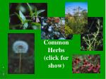 Common Herbs (click for show)