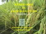 HYBRID RICE  IN  CROP RODUCTION (YEAR 2011-12)