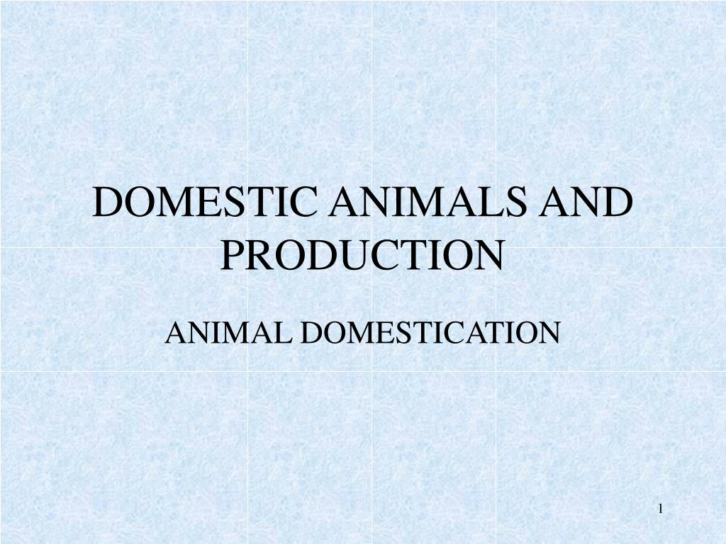 domestic animals and production l.