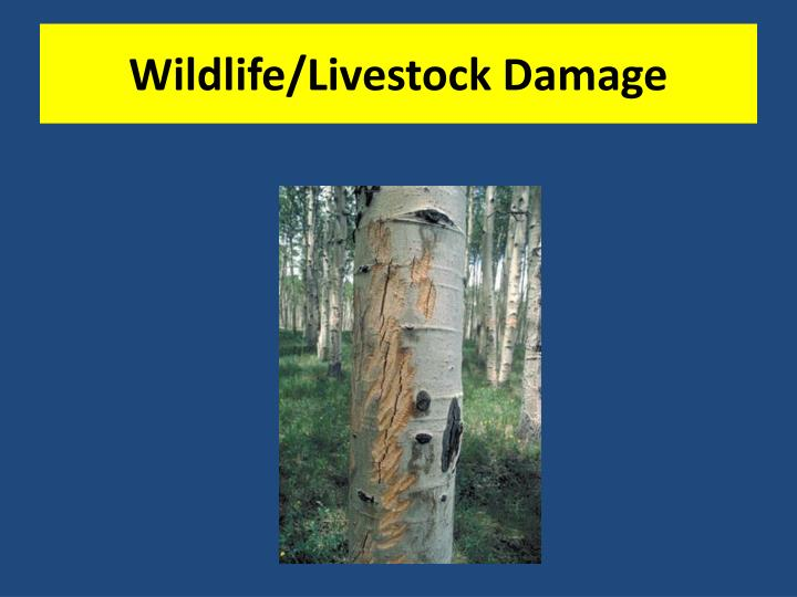 wildlife livestock damage n.