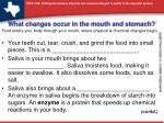 What changes occur in the mouth and stomach?