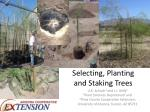 Selecting, Planting and Staking Trees
