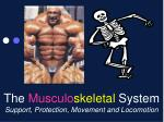 The  Musculo skeletal  System Support, Protection, Movement and Locomotion