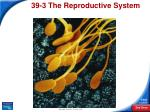 39-3The Reproductive System
