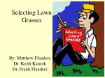 Selecting Lawn Grasses
