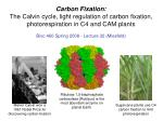 Carbon Fixation: The Calvin cycle, light regulation of carbon fixation, photorespiration in C4 and CAM plants