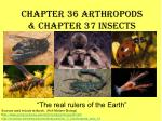 Chapter 36 Arthropods & Chapter 37 Insects