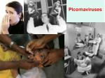 Picornaviruses