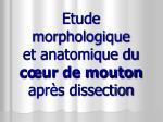 Etude morphologique et anatomique du cœur de mouton après dissection