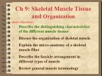 Ch 9: Skeletal Muscle Tissue and  Organization