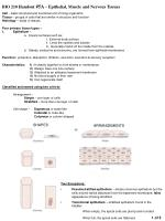 BIO 210 Handout #5A – Epithelial, Muscle and Nervous Tissues
