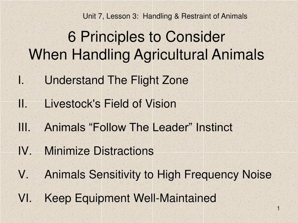 6 principles to consider when handling agricultural animals l.