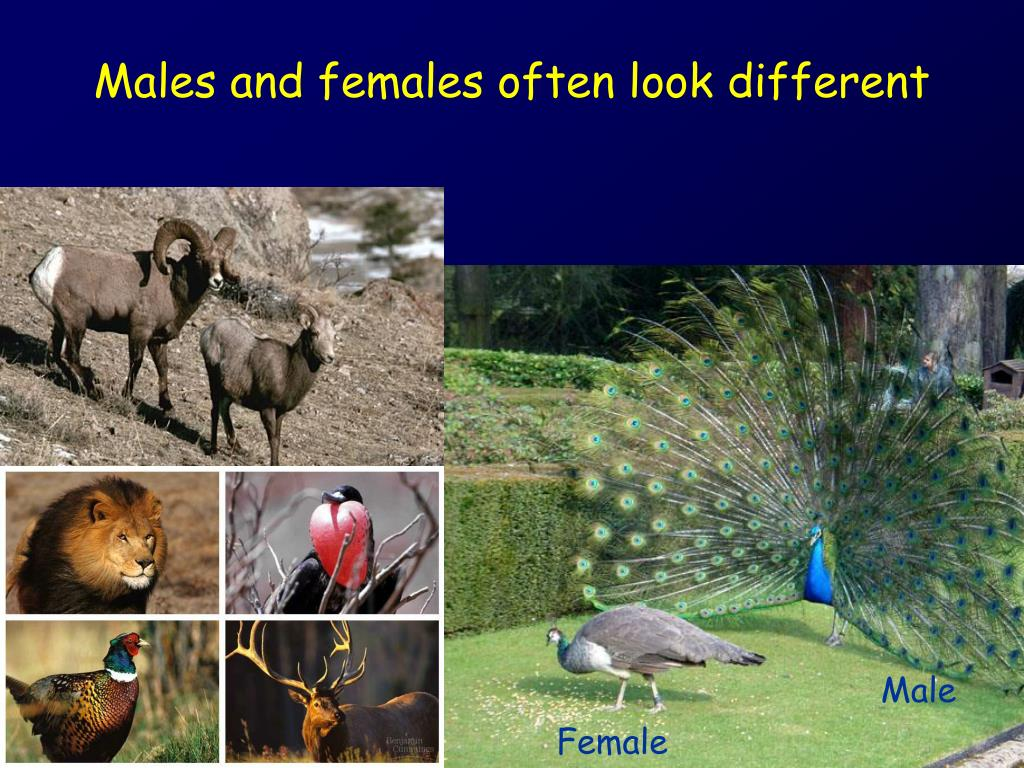 males and females often look different l.