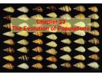 Chapter 23 The Evolution of Populations