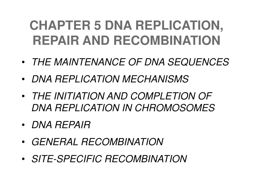 chapter 5 dna replication repair and recombination l.