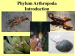 Phylum Arthropoda Introduction