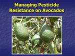 Managing Pesticide Resistance on Avocados