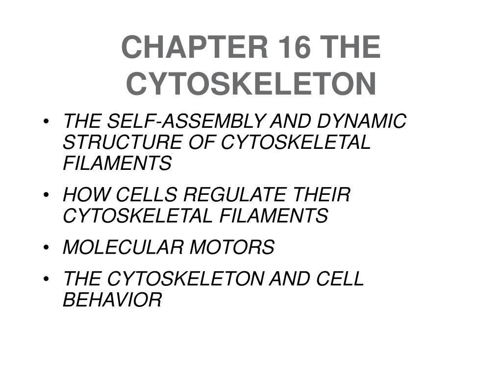 chapter 16 the cytoskeleton l.