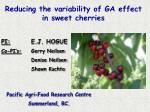 Reducing the variability of GA effect in sweet cherries