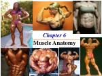 Chapter 6 The Muscle Anatomy