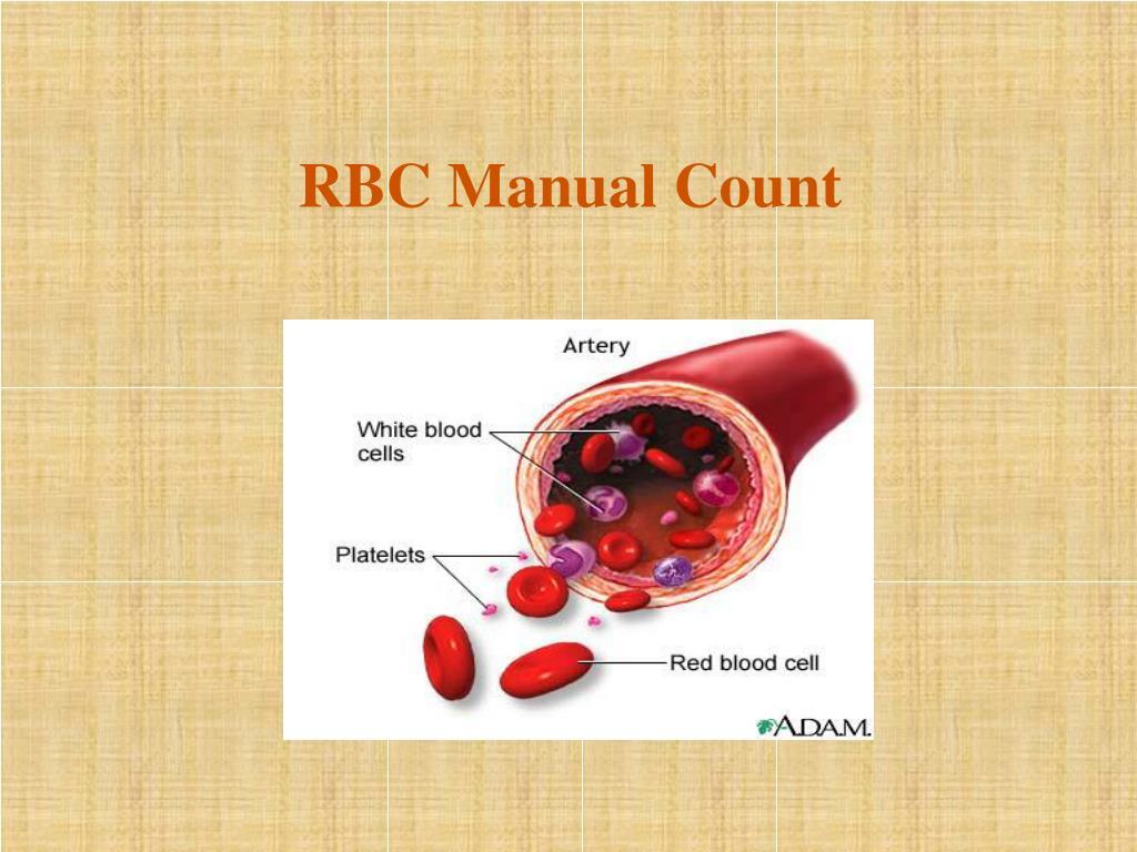 rbc manual count l.