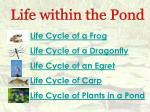 Life Cycle of a Frog Life Cycle of a Dragonfly Life Cycle of an Egret Life Cycle of Carp Life Cycle of Plants in a Pond