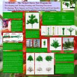 VCHERRY – The Virtual Cherry Tree Program for: - Developing and Testing Pruning and Training Decisions