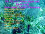 Ch. 15 con't Green algae and Slime mold Green algea: Phylum Chlorophyta