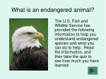 What is an endangered animal?