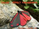 CAUSE - EFFECT PARAGRAPHS