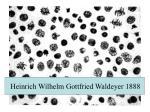 Heinrich Wilhelm Gottfried Waldeyer 1888
