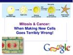 Mitosis & Cancer: When Making New Cells Goes Terribly Wrong!