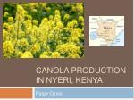 Canola production in  nyeri ,  kenya