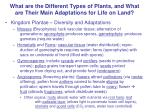 What are the Different Types of Plants, and What are Their Main Adaptations for Life on Land?