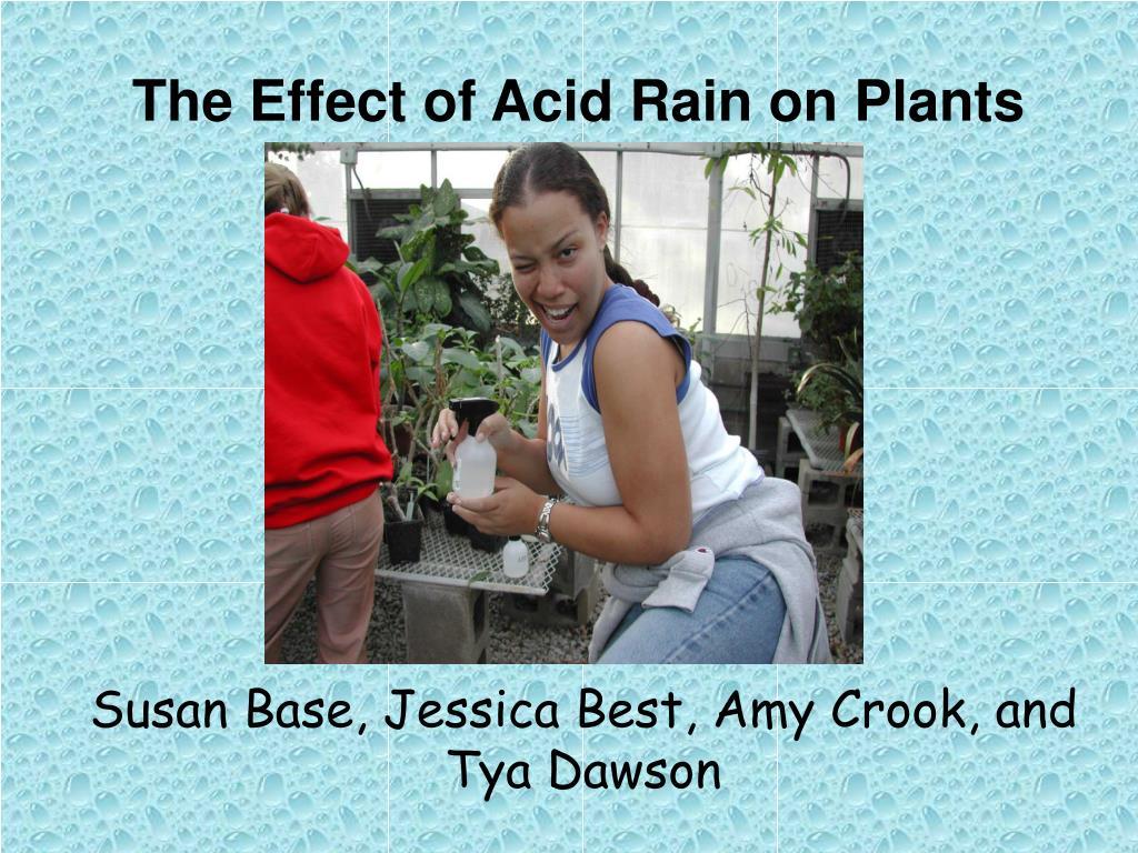 the effect of acid rain on plants l.