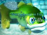 Gas Exchange in Fish