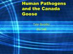 Human Pathogens and the Canada Goose